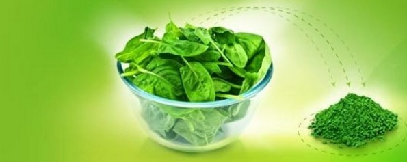 Appethyl Spinach Extract Powder